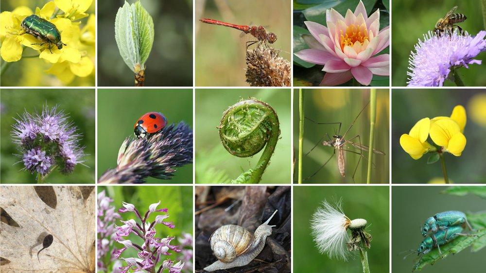 De mange forskellige arter er et eksempel på biodiversitet.